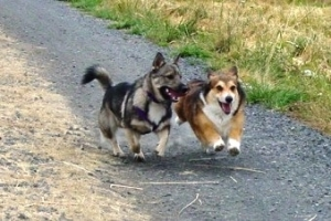 Moose and Hunda running!