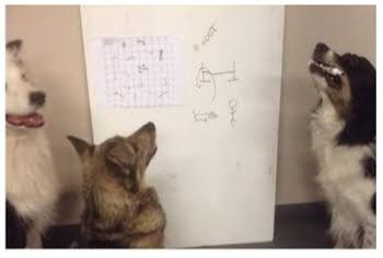 dogs teach